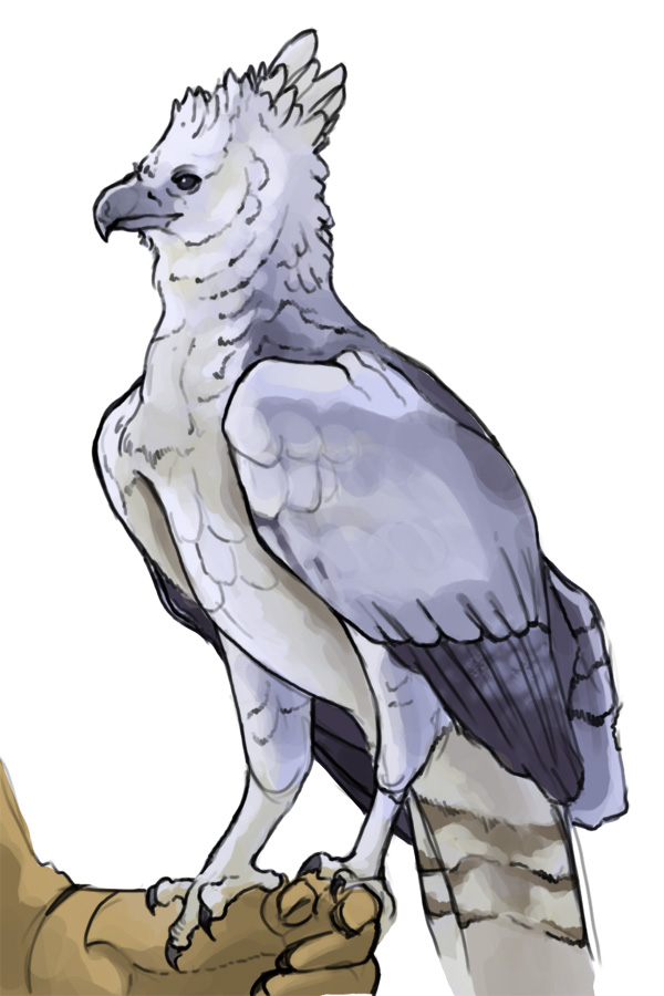 Harpy Eagle clipart Harpy Eagle eagle drawing Drawing