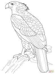 Harpy Eagle clipart Google Search Pinterest eagle easy