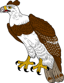 Harpy Eagle clipart Browse for Harpy Eagle your