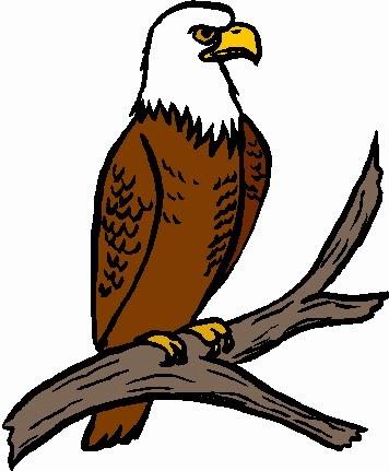 Harpy Eagle clipart Of the clip arts: Jungle: