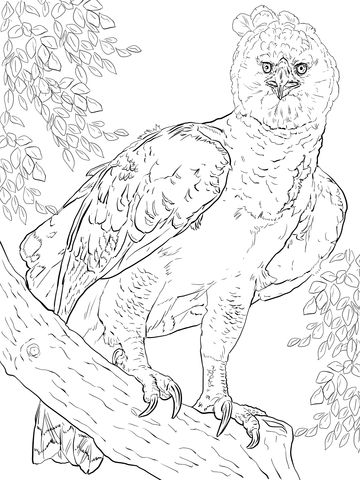 Harpy Eagle clipart Version of page to see
