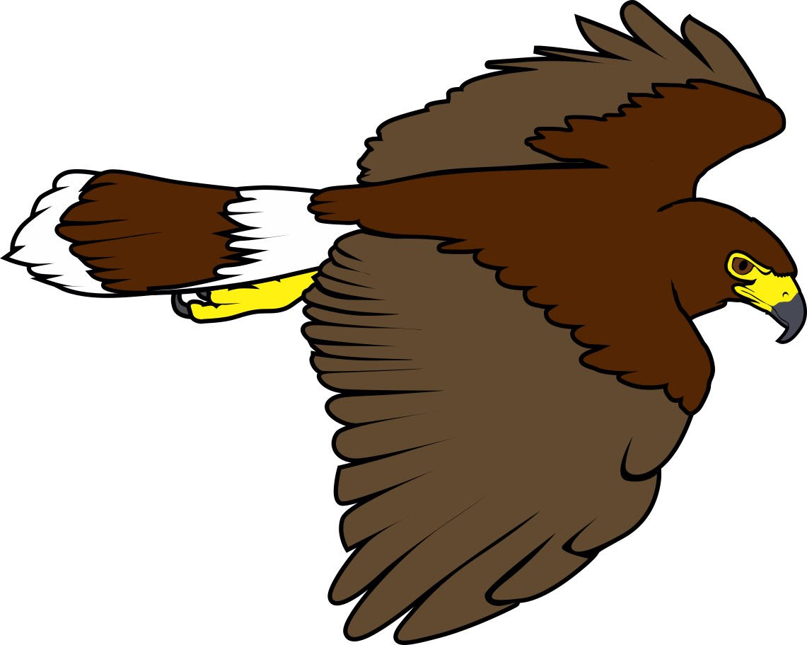 Harris Hawk clipart Falconry hunting Harris Falconry squirrel