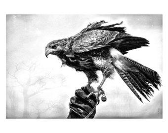 Harris Hawk clipart clipart black and white #12