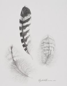 Harris Hawk clipart pencil drawing Original red hawk hawk tailed