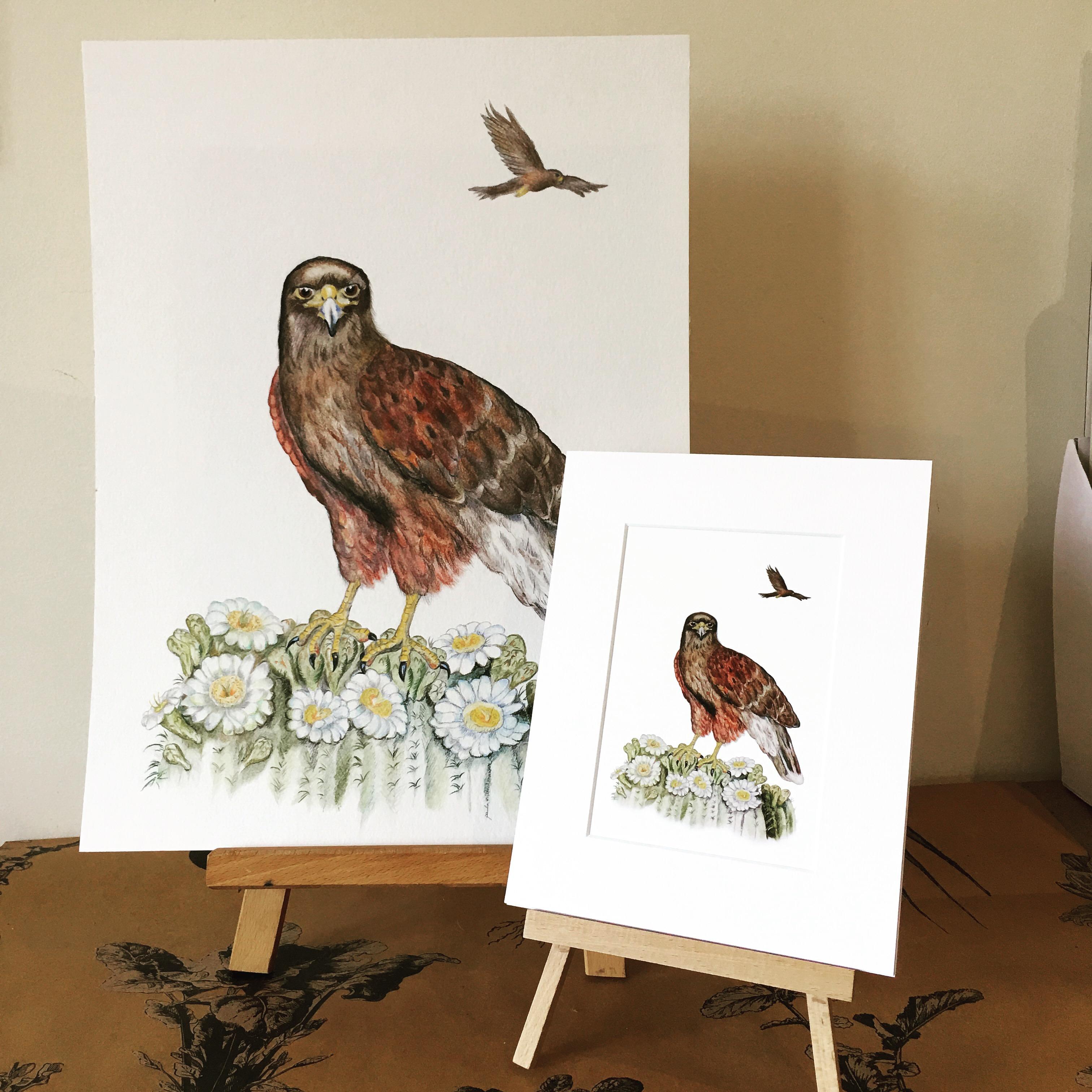 Harris Hawk clipart pencil drawing Hawk her It – Crafts