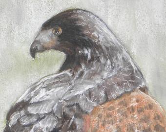 Harris Hawk clipart pencil drawing Hawk drawing Pastel Hawk Original
