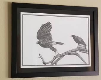 Harris Hawk clipart pencil drawing Hawk Etsy Hawk Drawing Harris'