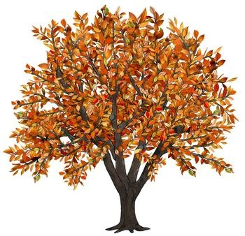 Tree clipart autumn leaves #14