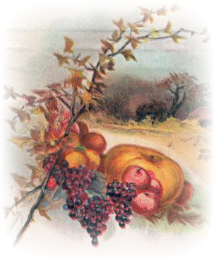 Cornucopia clipart vintage Thanksgiving harvest art Free bounty