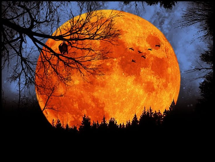 Harvest Moon clipart equinox Moon best The year ideas