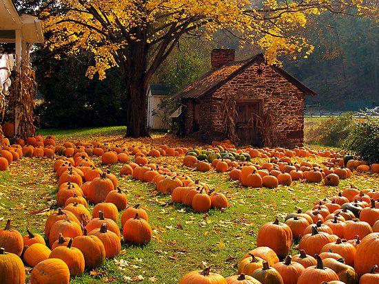 Harvest Moon clipart fall pumpkin 20+ Farm' Hwy farm Pumpkin