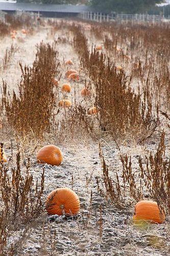 Harvest Moon clipart fall pumpkin Best on HarvestAutumn about images