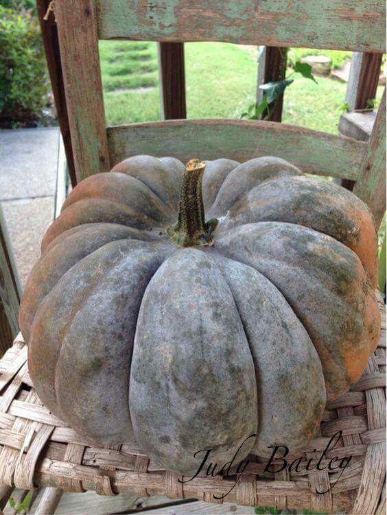 Harvest Moon clipart fall pumpkin On 6843 ~ Pinterest best