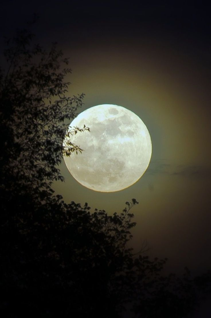 Harvest Moon clipart first quarter moon Images Shimmery on more best
