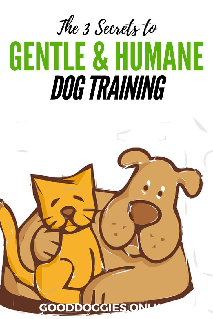 Haven clipart obedience 2211 best Dog  Training