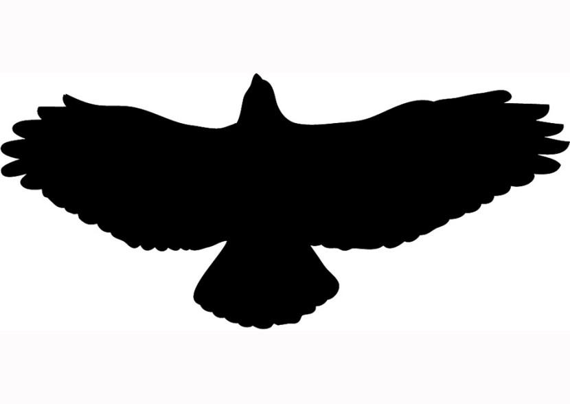 Hawk clipart Clipart Images Clipart Hawk Clipart