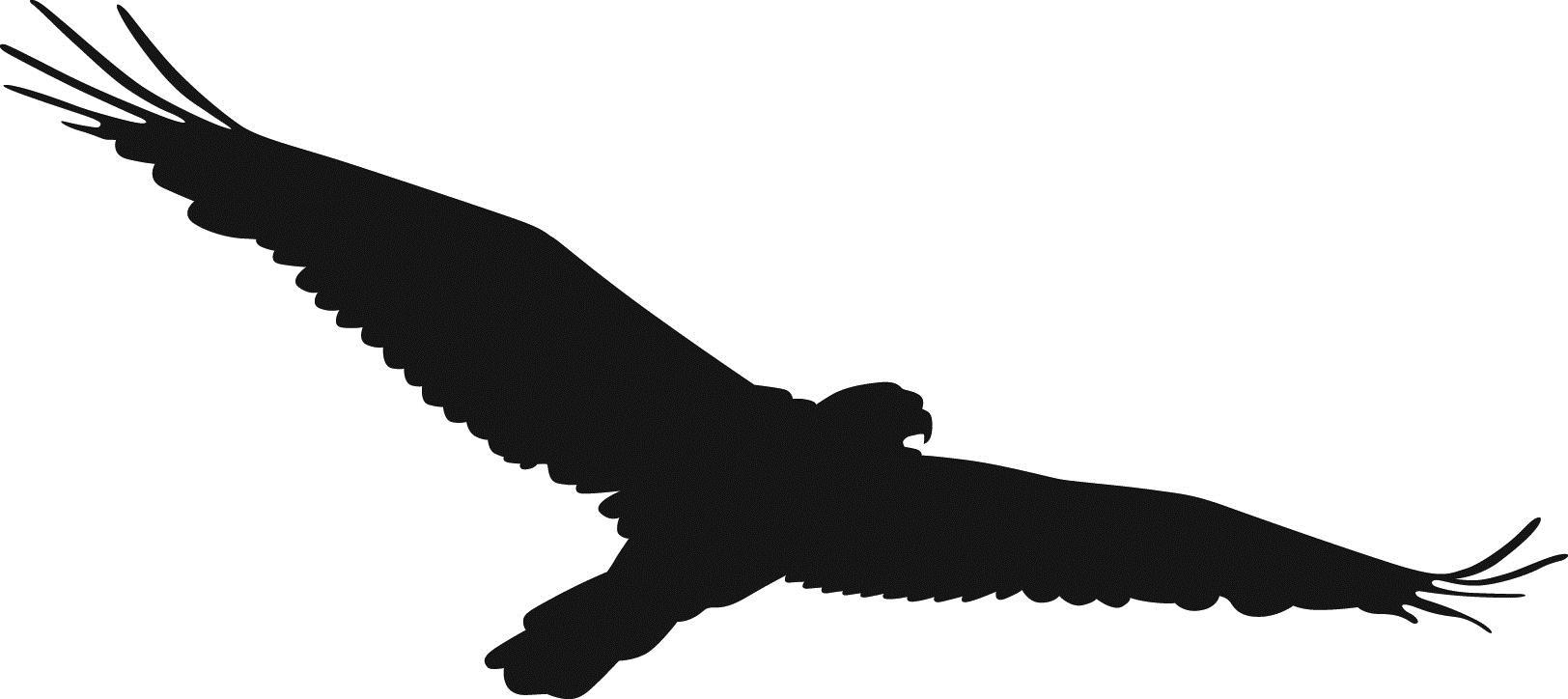 Hawk clipart Clip Top Hawk Hawk 6