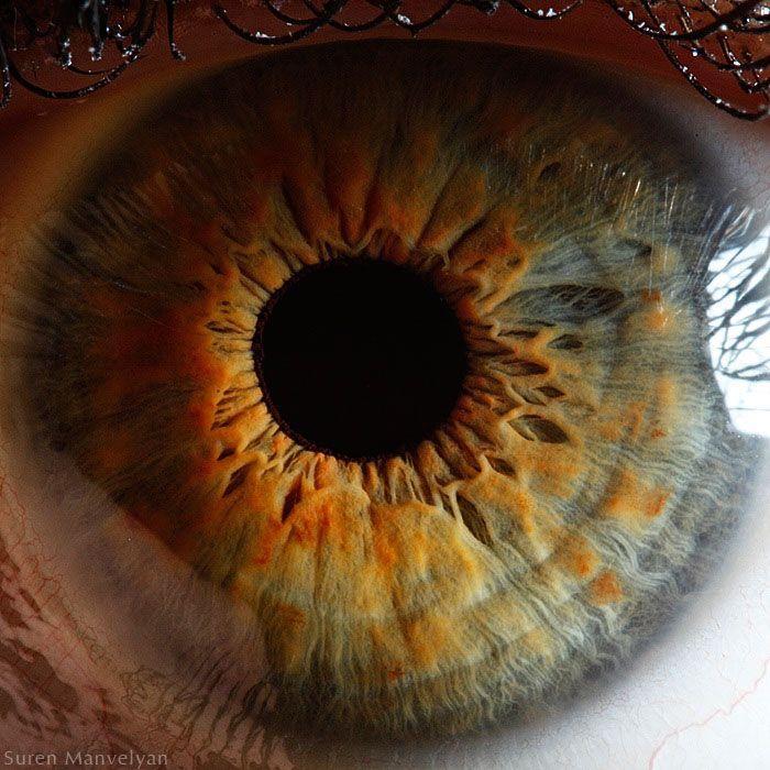 Hazel Eyes clipart beautiful eye This images Find Pinterest best