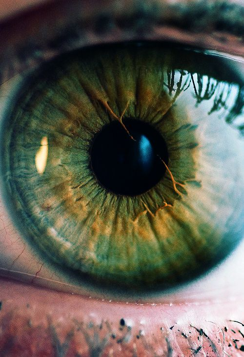 Hazel Eyes clipart beautiful eye This The Find photography The