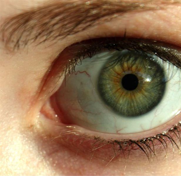 Hazel Eyes clipart beautiful eye Color Eyes Search earth Pinterest