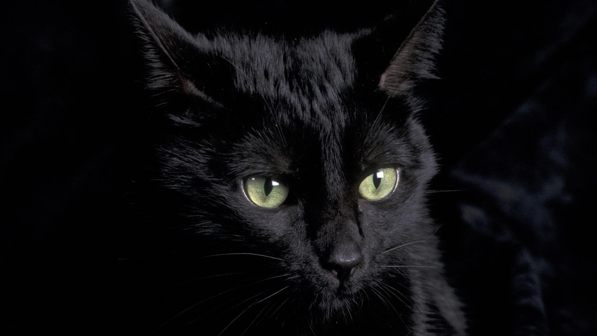 Hazel Eyes clipart black and white Black Cat  Clipart wallpaper
