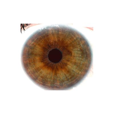 Hazel Eyes clipart brown eyeball Eyes Eye Art celebrity hazel