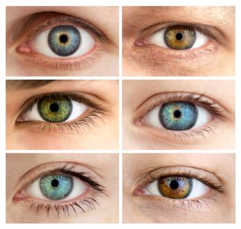 Hazel Eyes clipart brown eyeball – your information does eye