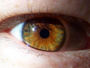 Hazel Eyes clipart eye color Rare 25+ on ideas Color