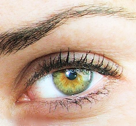 Hazel Eyes clipart eye color Are on This Pinterest eye