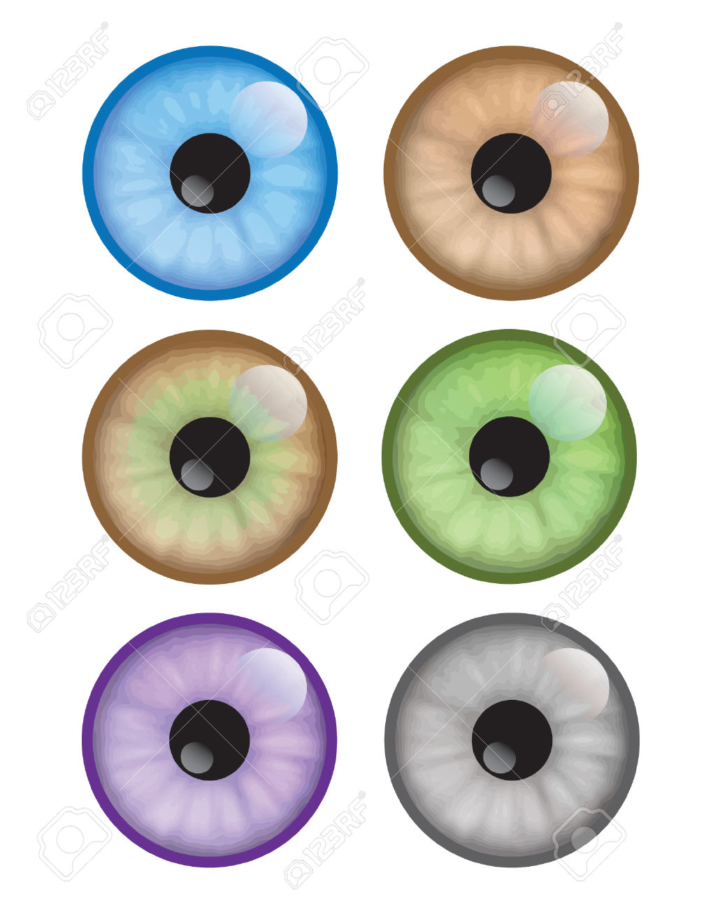 Hazel Eyes clipart eye color Different collection Colour Clipart eyes