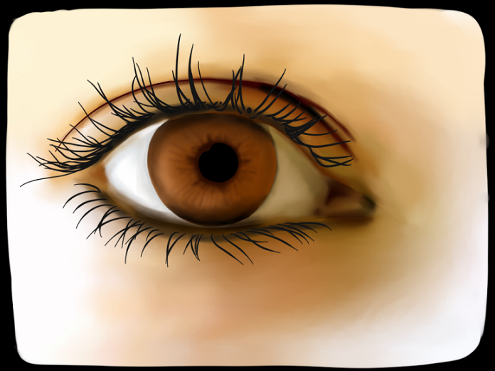 Hazel Eyes clipart female eye Eye eye Hazel Eye Clipart