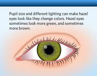 Hazel Eyes clipart grey eyes Interesting and charts examples eye