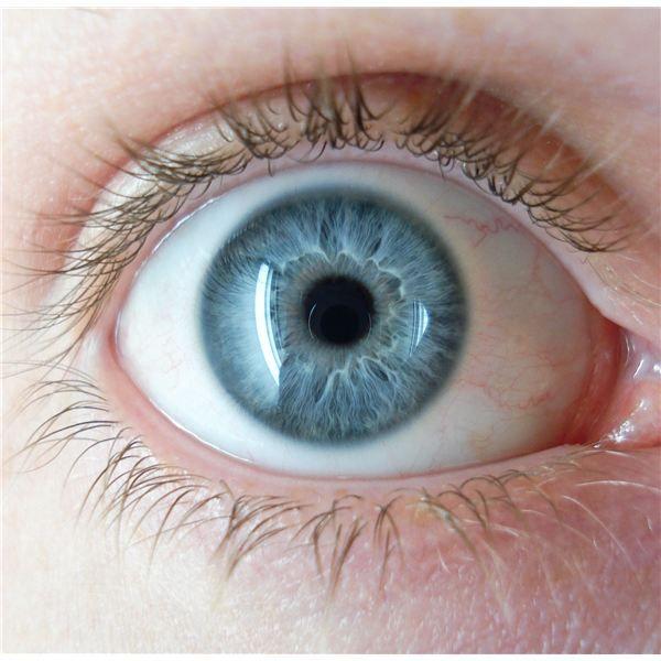 Hazel Eyes clipart grey eyes How Genetics: Facts eyes