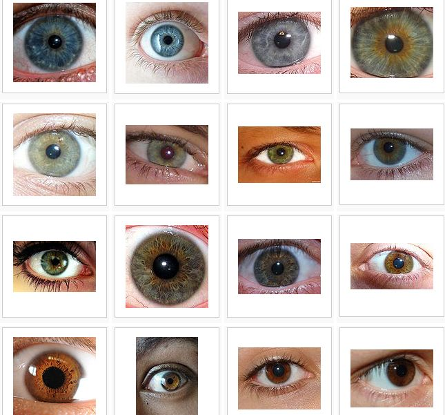 Hazel Eyes clipart grey eyes Eye about Rare Fun Eye