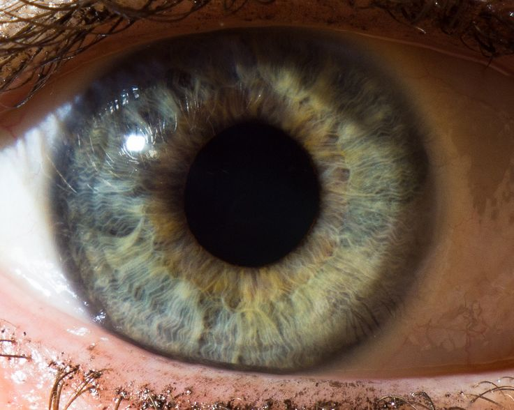Hazel Eyes clipart pair eye Eyes about 109 on eye
