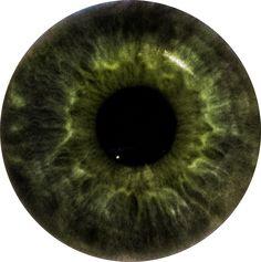 Hazel Eyes clipart sight Com Marc by on Quinn