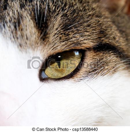 Hazel Eyes clipart small eye Of Photo of  Eyes