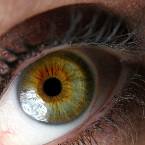 Hazel Eyes clipart visual #15