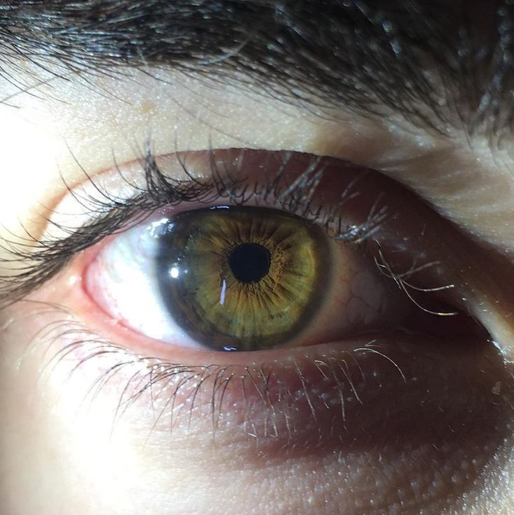 Hazel Eyes clipart visual #4