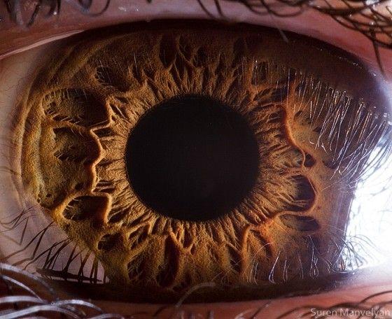 Hazel Eyes clipart visual #7