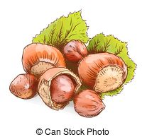 Hazelnut clipart A 1 EPS Isolated Hazelnut