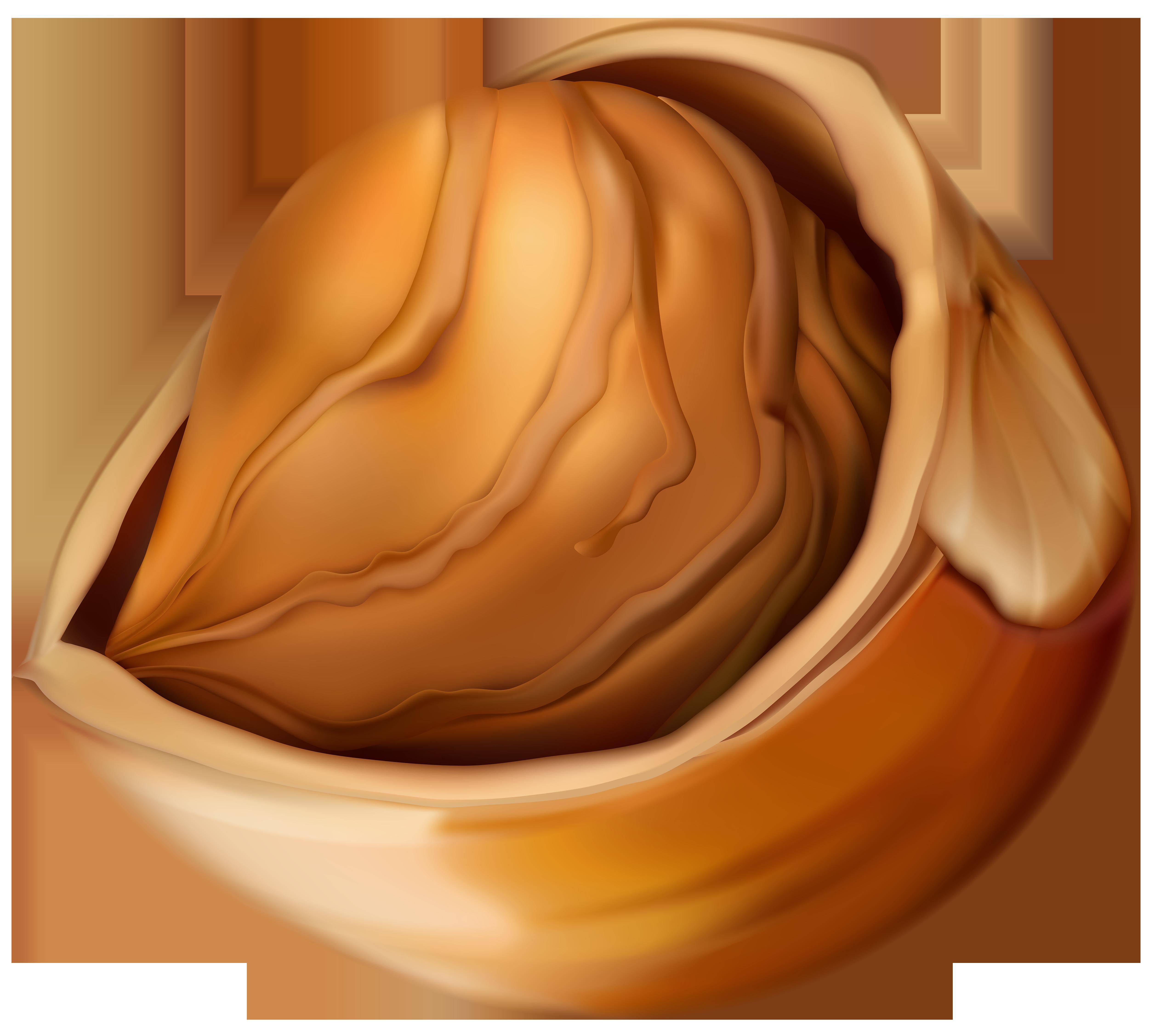 Hazelnut clipart Clip Image Gallery size Yopriceville