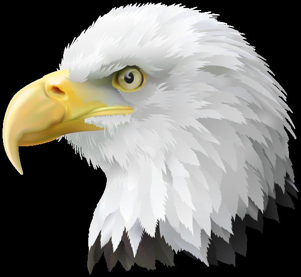 America clipart american eagle Art Clip American Image Transparent