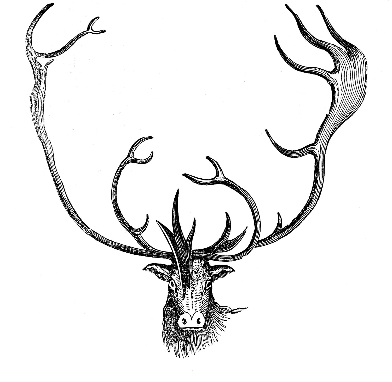 Caribou clipart animal Antlers Animal Fairy Art Clip