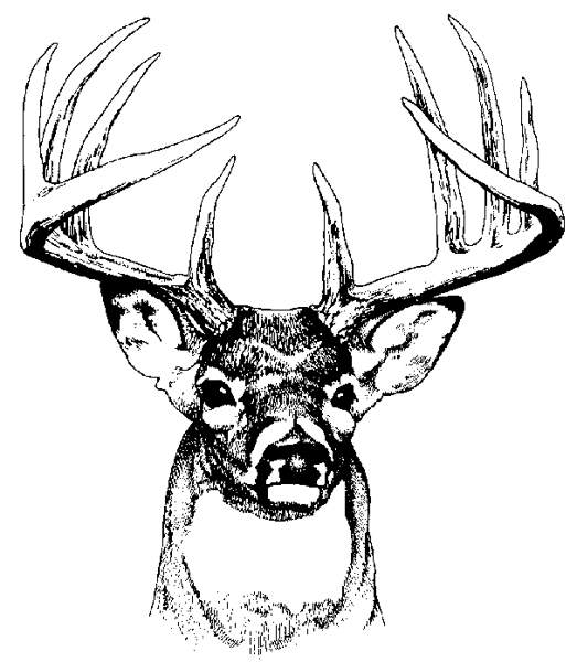 Buck clipart coloring page Collection Deer art clip head