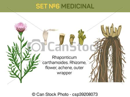 Healing clipart root Parts of of flower rhizome