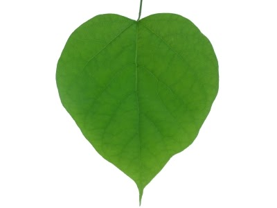 Heart-shaped clipart leaf #2