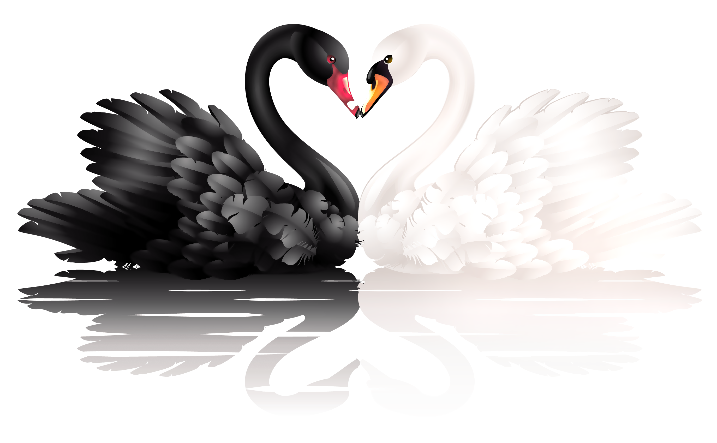 Heart-shaped clipart transparent PNG with Black Clipart Swans