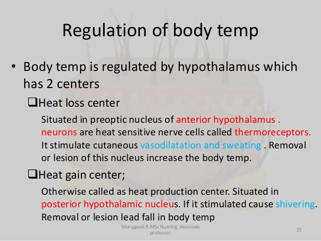 Heat clipart body temperature Temperature 15 Regulation of temp
