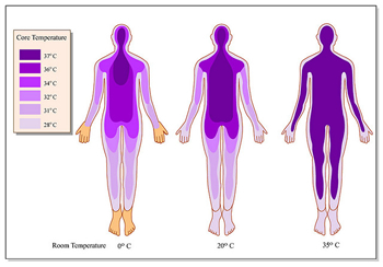 Heat clipart body temperature Proper are Causing Your enzyme